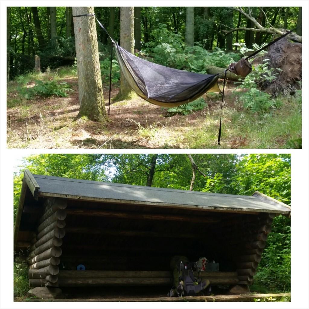 Shelteret og (WBBB)Blackbird