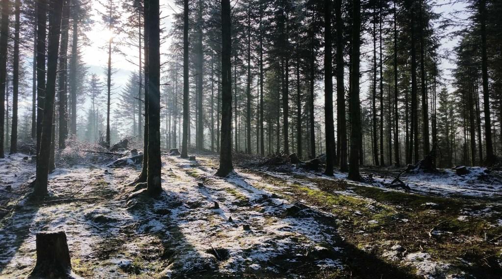 Vinter smuk skov.