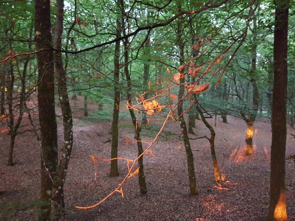 Morgensolen stråler gennem skoven..